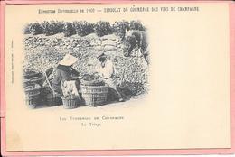 Les Vendanges En Champagne Le Triage Exposition Universelle De 1900 - Syndicat Du Commerce Des Vins De Champagne - Weinberge