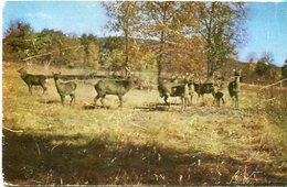 FAMILY GATHERING IN THE CARSKILLS, MOUNTAINS, N.Y. U.S.A. POST CARD CPA CIRCA 1970's NOT CIRCULATED - LILHU - Catskills
