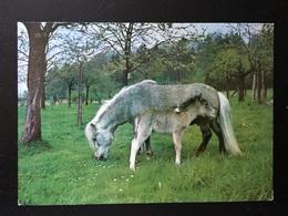 Animales Caballos - Chevaux