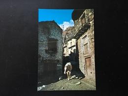 Animales Caballos - Cavalli