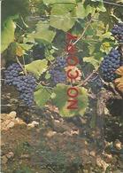 Cépage Rouge Pinot Noir Vignoble De Neuchatel Annullata Castelvetro 150° Unità D'Italia, Bartolomeo Cavedoni. - Vigne