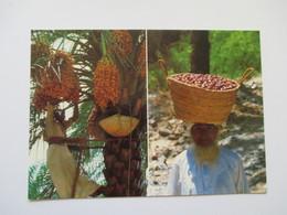 Harvesting Dates  Sultanate Of Oman - Oman