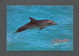ANIMAUX - ANIMALS - POISSON - FISH - DOLPHIN FROLICS IN THE OCEAN ALONG THE FLORIDA COAST - PHOTO K.AITKEN - Poissons Et Crustacés