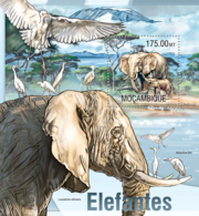 Mozambique 2013  Fauna Elephant - Mozambique