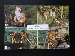 Animales Mono - Monos