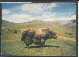 Mongolia, Salgar-Yak(?), 1986. - Mongolei