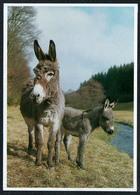 C5857 - Welpe Hundewelpe - Postkartenkalender - Foto Reinhard - DG Verlag - Burros