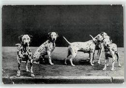 52891220 - Dalmatiner - Hunde