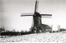 WOESTEN Bij Vleteren (W.-Vl.) - Molen/moulin - Winterbeeld Van De Verdwenen Beukmolen Ca. 1916 Voor Zijn Verwoesting - Vleteren