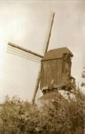PAAL Bij Beringen (Limburg) - Molen/moulin - Maxikaart Van De Verdwenen Gielenbergmolen Omstreeks 1950 - Beringen