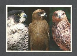 ANIMAUX - ANIMALS - BIRDS - OISEAUX - PERENGRINE FALCON - BLACK KITE - TAWNY EAGLE - BY S. CHOMOCO - Oiseaux