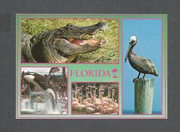 ANIMAUX - ANIMALS - BIRDS - OISEAUX - WHALE - FLAMINGOS CROCODILE - FLORIDA NATURE'S PARADISE - PHOTO WERNER BERTSCH - Oiseaux