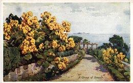 FLOWERS AND GARDENS OF MADEIRA-SERIE NO. 49-A GROUP OF SENECIO - Madeira