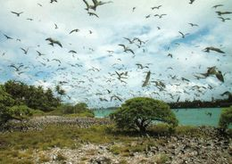 1 AK Palmyra Atoll Im Pazifik * Sooty Tern Colony - Rußseeschwalben Auf Dem Palmyra Atoll Zu Den USA * - Ansichtskarten