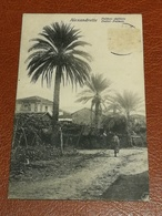 CPA TURQUIE ALEXANDRETTE (ISKENDERUN) - Palmes-Dattiers - Dattel-Palmen - Edition Husseini 628-32 - Turchia