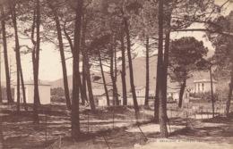 PC52440 Cavalaire A Travers Les Pins. Phototypiques. No 1157 - Postkaarten