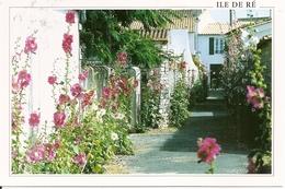 17. CPM. Charente Maritimes. Ile De Ré. Venelle Fleurie De Roses Trémières (animée) - Ile De Ré