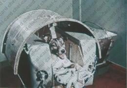 """[2017, Space, Dogs, Rockets] Postcard """"[Dogs Laika Before Space Flight]"""". - Rusland"""