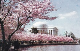 JEFFERSON MEMORIAL WITH CHERRY TREES IN BLOOM. PRINCE LITHO CO. CPA CIRCA 1960s - BLEUP - Arlington