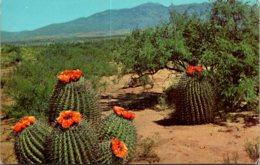 Barrel Cactus On The Desert - Cactusses