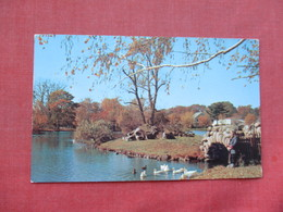Feeding Ducks   New York > Long Island      Ref 3390 - Long Island