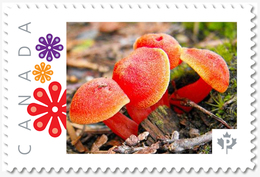 """RED FUNGUS MUSHROOMS = """"P""""- Rate = Picture Postage MNH Canada 2019 [p19-05s05] - Paddestoelen"""