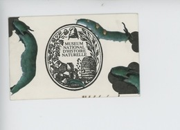 Ticket - Muséum National D'Histoire Naturelle - Galerie De L'évolution 1998 (chenille) - Toegangskaarten