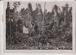 BUSY KENTISH HOPPERS WEST MALLING KENT La Cueillette Du Houblon Hop Picking 20*15 CM Fonds Victor FORBIN 1864-1947 - Profesiones