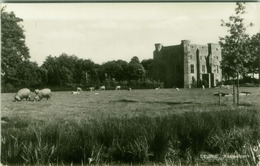 NETHERLANDS - DEURNE KASTEELPARK - 1950s/60s  (BG3623) - Deurne