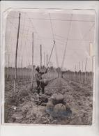 ETAT SEE SCAN /// HOP KENT ? La Cueillette Du Houblon Hop Picking 25*20 CM Fonds Victor FORBIN 1864-1947 - Profesiones