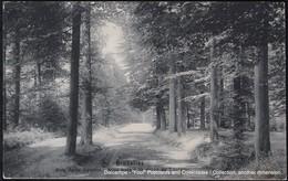 Bruxelles Brussel Brussels Bois De La Cambre Ter Kamerenbos Drève De Lorraine Lorrainedreef - Forêts, Parcs, Jardins