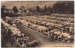CPA N/b Canton De Bern Viehschau In Oey Diemtigen Marché Aux Vaches Edit: Photo FR. Eymann Burgdorf - BE Berne