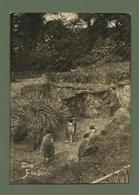CARTE POSTALE ZOO EDINBURGH EDINBOURG PENGOUINS IN ZOOLOGICAL GARDENS PINGOUINS - Scotland