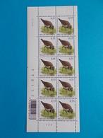 COB 3267  PETIT GRAVELOT 25 III 04    - 10% DE LA FACIALE - 1985-.. Pájaros (Buzin)