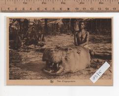 8376  TETE D HIPPOPOTAME - Congo Belga - Altri
