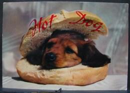 CP. 2662. Hot Dog. Tête De Chien Dans Un Pain. - Hunde