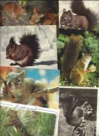 Lot De 30 CPM Thème ECUREUIL écureuils - Toutes Différentes - Sonstige