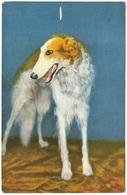 Borzoi Borsoi Lévrier Russe Russischer Windhund - Stehli - Dogs