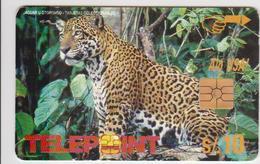 #10 - PERU-05 - JAGUAR - Peru