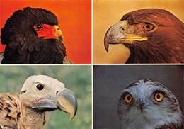 Zoo Villars Les Dombes Rapace Aigle Circaète - Uccelli