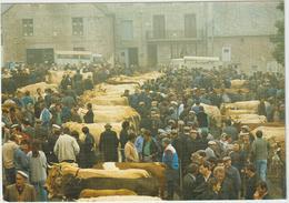Cantal  Jour De  Foire  Sur Les  Monts D ' Aubrac  1996 , Vache - France