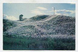 TRINIDAD & TOBAGO - AK 350932 Trinidad Snow - Sugar Cane In Bloom - Trinidad