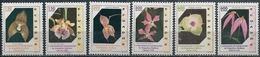 Ecuador/Equateur: Orchidee Diverse, Different Orchids, Différentes Orchidées - Orchidee