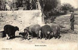 SUISSE - SCHWEIZ - HELVETIA, Types Of Switzerland, Étude Champètre - 1905 - Zonder Classificatie