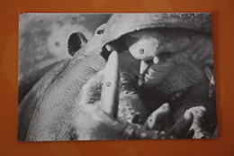 Garda Zoo , Hippo - Old Postcard - Ippopotami