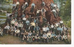 23145) Canada Vancouver Postmark Cancel 1914 Boole Tree Loggers - Colombie Britannique