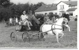 Bemmel Pony Concours - Nederland