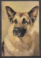 ANIMALS POSTCARD DOG - Dogs