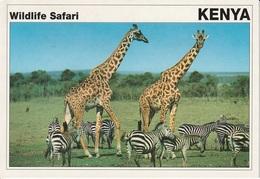 Cartolina Dal Kenya (giraffe E Zebre) - Per Bologna 1996 (vedi Foto) - Kenia