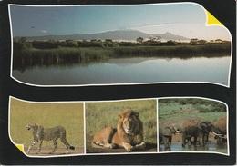 Cartolina Dalla Tanzania - Per Ponzone 1988 (vedi Foto) - Tanzania